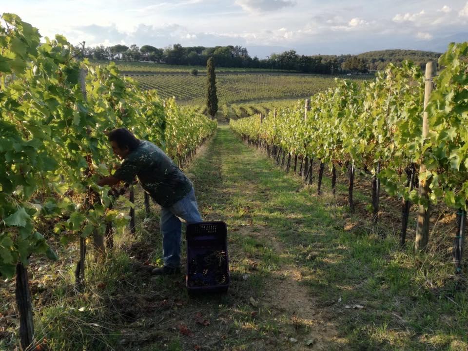 fattoria betti vino